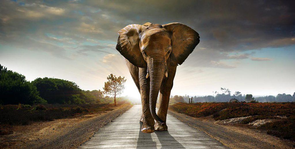 STAHLHÄRTER Elefant